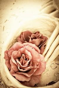 ősz-nyár virág
