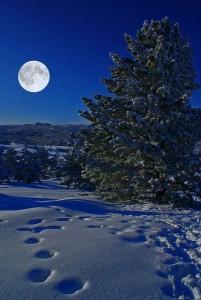 tél-ősz táj